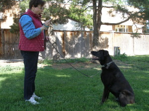 Dog Training Programs in Potomac Gaithersburg & Germantown, MD
